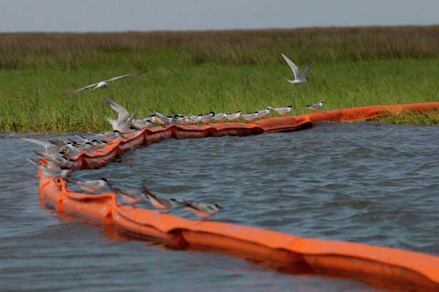 Sea gulls sit on a containment boom at Catfish Pass in Breton Sound  on May 3, 2010 as efforts continued to protect the fragile Louisiana marshes from the Deepwater Horizon oil spill. ( Melissa Phillip / Houston Chronicle )