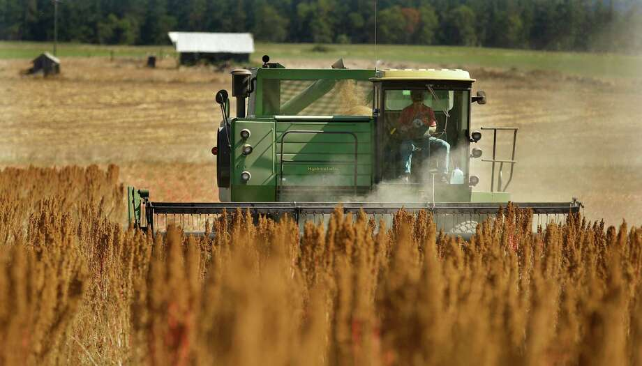 Farmer Sam McCullough uses his combine to harvest quinoa near Sequim, Wash. Quinoa, a trendy South American grain, barely has a foothold in American agriculture, but a handful of farmers and university researchers are working toward changing that. Photo: Ted S. Warren /Associated Press / Copyright 2016 The Associated Press. All rights reserved.