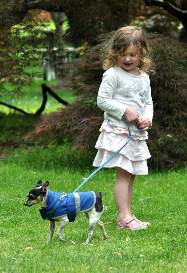 Georgia Bennett, 3.5, of Fairfield, walks seven year old Minnie the toy fox terrier during the Dogwood Festival in Fairfield on Sunday, May 9, 2010. Photo: Amy Mortensen / Connecticut Post