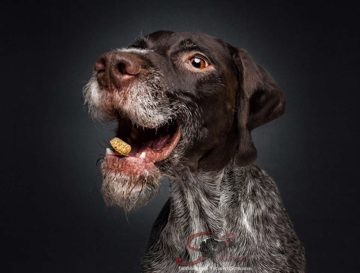 German photographer Christian Vieler captures hilarious photos of dogs' reactions - whether happy, sad or confused - while they try to catch treats in the air.