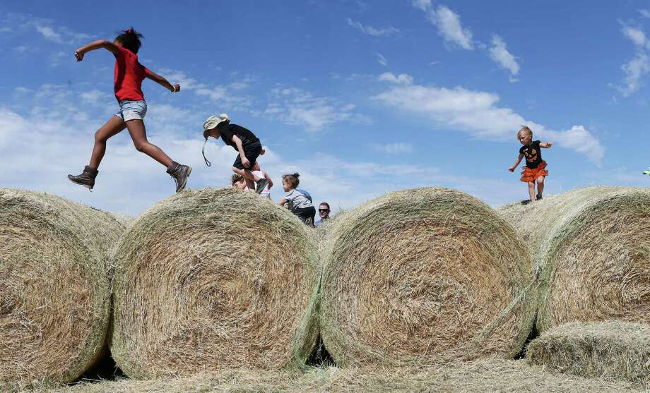 Children play on hay bales at the South Texas MAiZE along U.S. 90 east of Hondo, Texas, Sunday, Oct. 9, 2016. It features a 7-acre maze along with food and other entertainment for children. The maze opens every Fall since 2001. It opens to the public on Fridays through Sundays until November 20th. It is available for school field trips Tuesday through Friday. Photo: JERRY LARA, Staff / San Antonio Express-News / © 2016 San Antonio Express-News