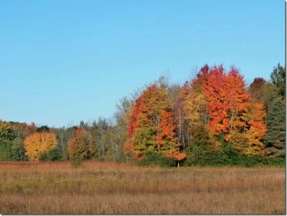 Photo provided A guided hike is planned Saturday to enjoy the changing leaf color at the McLean Nature Preserve, located at 2199 N. Flajole Road in northwestern Bay County.