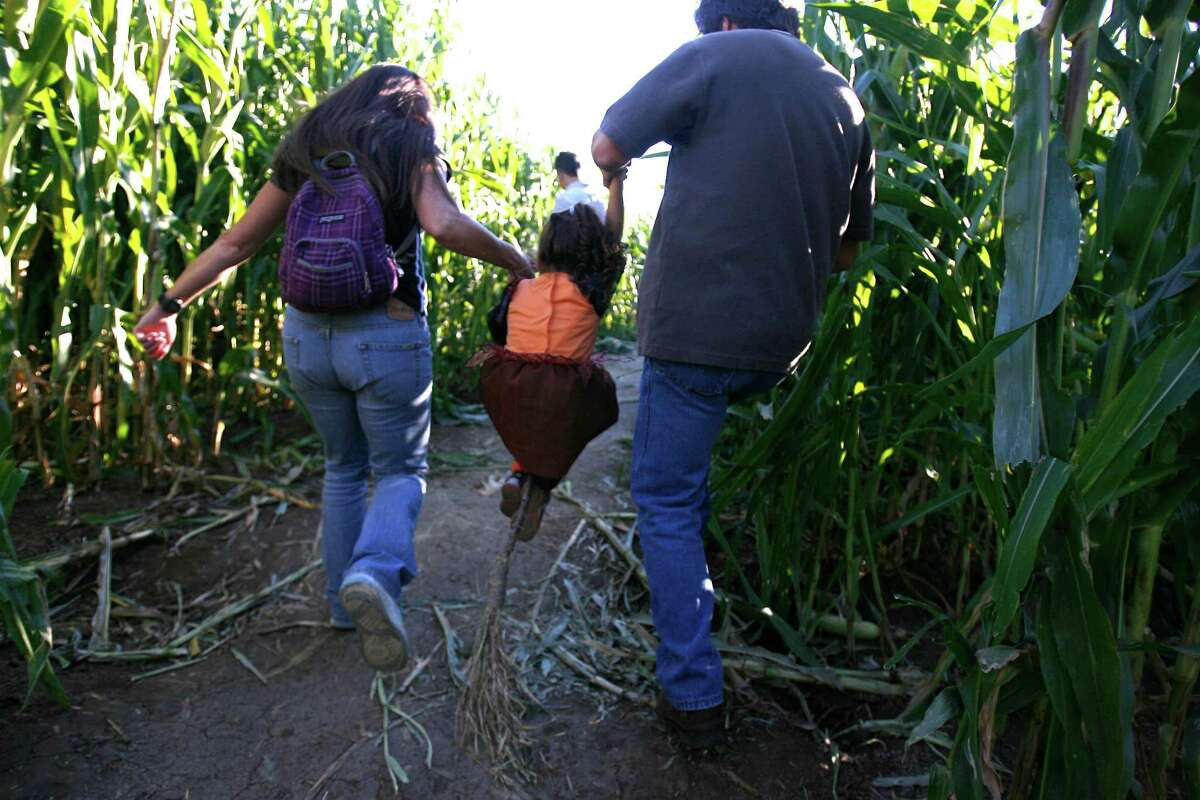 cornmaze_084_ls.jpg From right: Alan Holman of Sacramento, Brooke Abess, 3 of Vallejo and Carol Childo of Sacramento. Holman and Chido