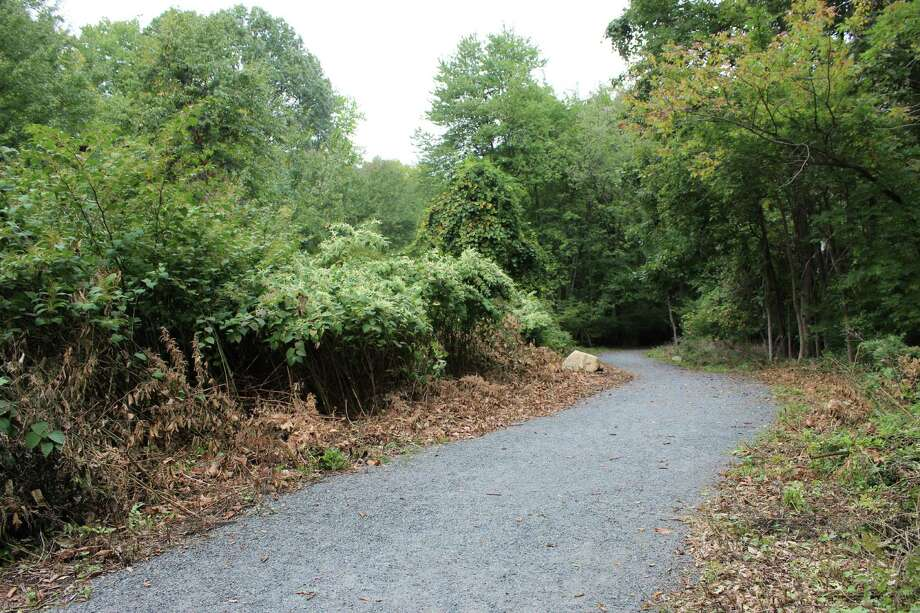 Two weeks ago, a group of Wilton Stewards cleared brown undergrowth from the Wilton section of the Norwalk River Valley Trail near Sharp Hill Road and Autumn Ridge Drive. Photo: Stephanie Kim / Hearst Connecticut Media