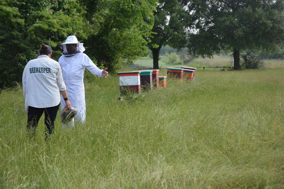 Kathleen Phillips/Texas A&M AgriLife Research Dr. Juliana Rangel Posada, Texas A&M AgriLife Research honey bee scientist, (left) examines hives near College Station.