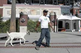 Rodnel Magat walks with a goat outside of AT&T Park before Game 4 of baseball's National League Division Series between the San Francisco Giants and the Chicago Cubs in San Francisco, Tuesday, Oct. 11, 2016. (AP Photo/Marcio Jose Sanchez)
