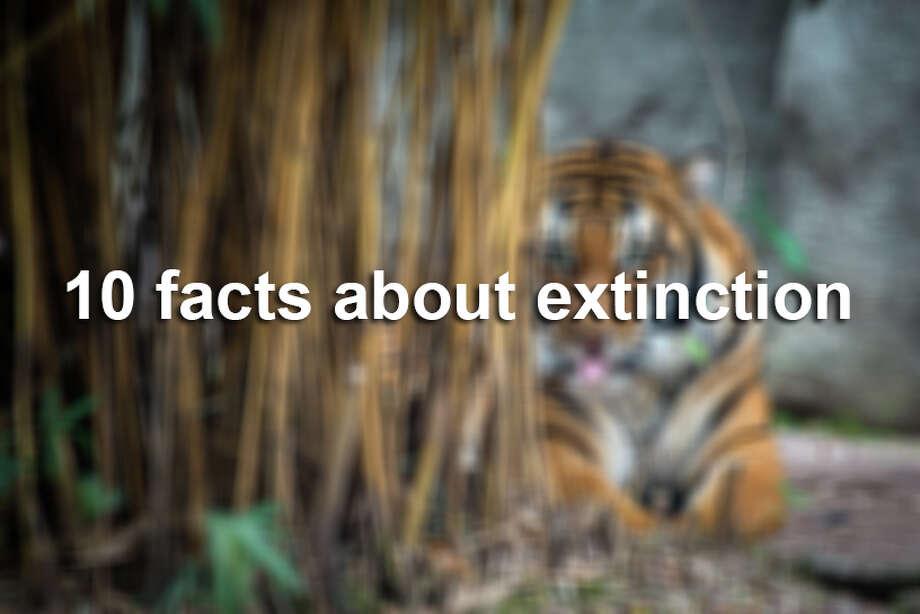 / © Stephanie Adams, Houston Zoo