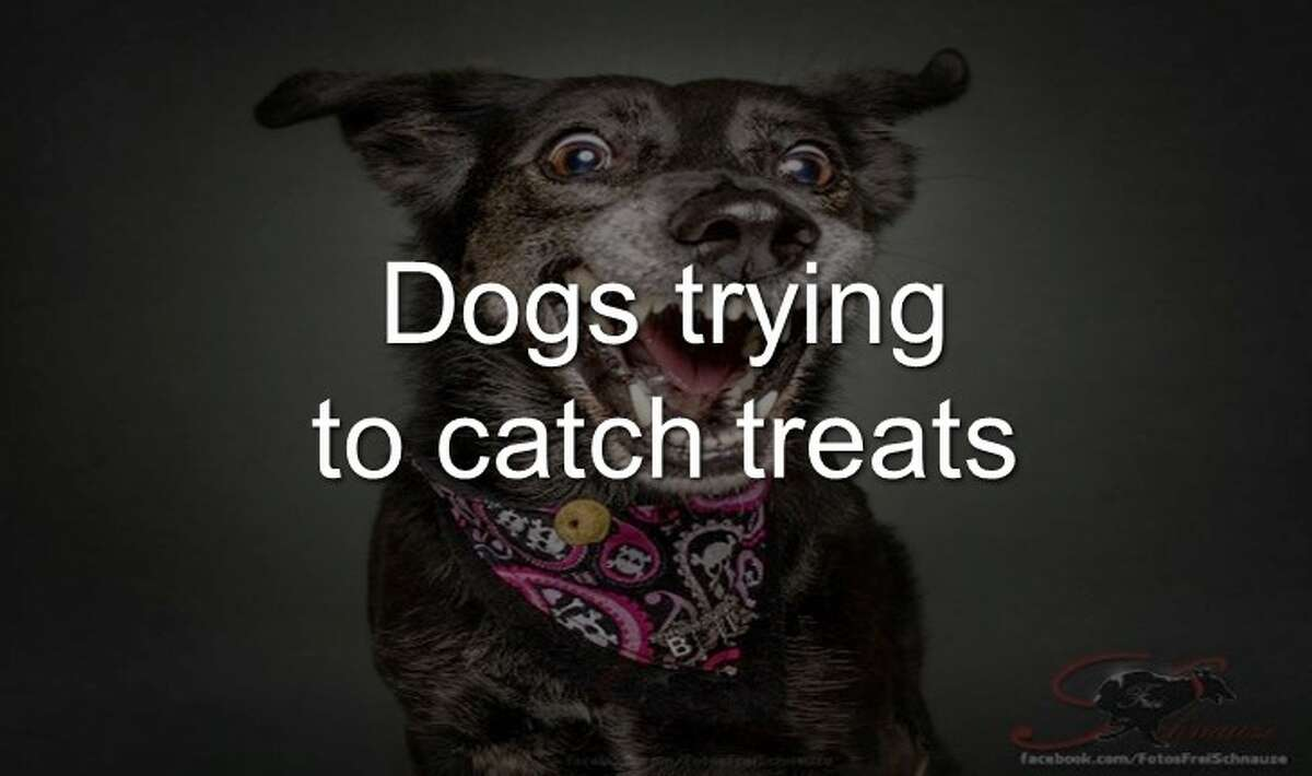 Click through the slideshow to see the faces dogs make when they catch treats.