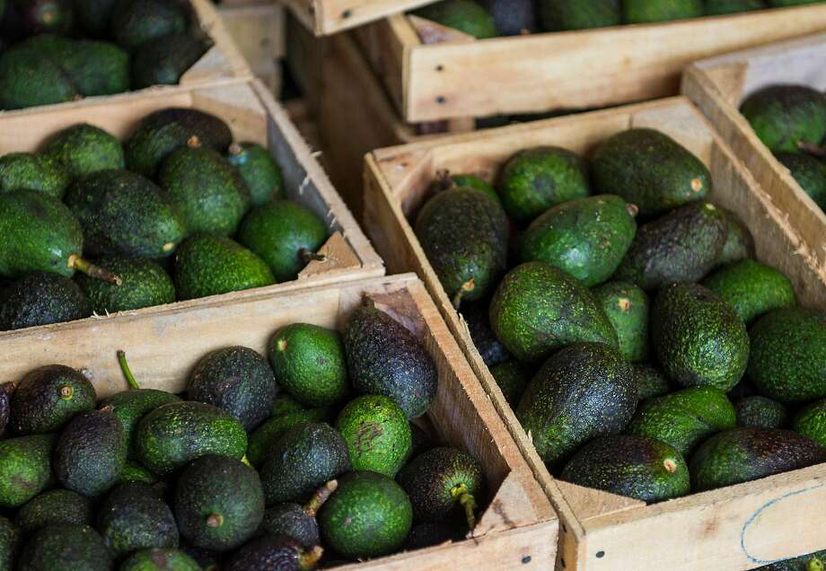 Crates of avocados from Michoacan available for sale at a market in Mexico City, Tuesday, Aug. 9, 2016. High avocado prices have fueled deforestation in Michoacan, where farmers cut down pines to clear the way for more avocado trees. Photo: Nick Wagner / Associated Press 2016