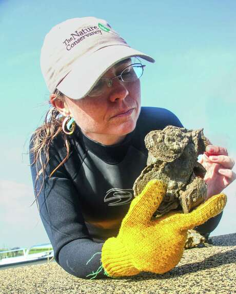 Julie Sullivan of The Nature Conservancy inspects a clump of live oysters from thriving Half Moon Reef, an oyster reef restoration project in Matagorda  Bay that has proved a boon to recreational anglers as well as marine life. Photo: Shannon Tompkins