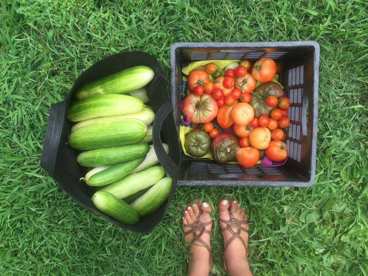 Vegetables picked from the community garden built by Nancy Juarez and other Westhill High School students.
