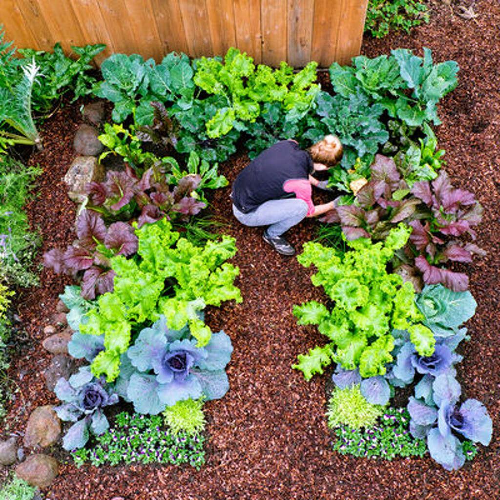 plant a cool season vegetable garden sfgate