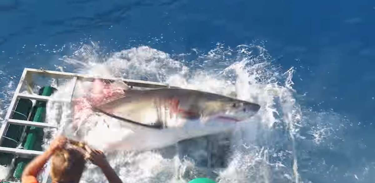A video released on Wednesday shows the moment a great white shark breaks into a shark cage while a diver is still trapped inside. Click through to see Hollywood films about sharks.