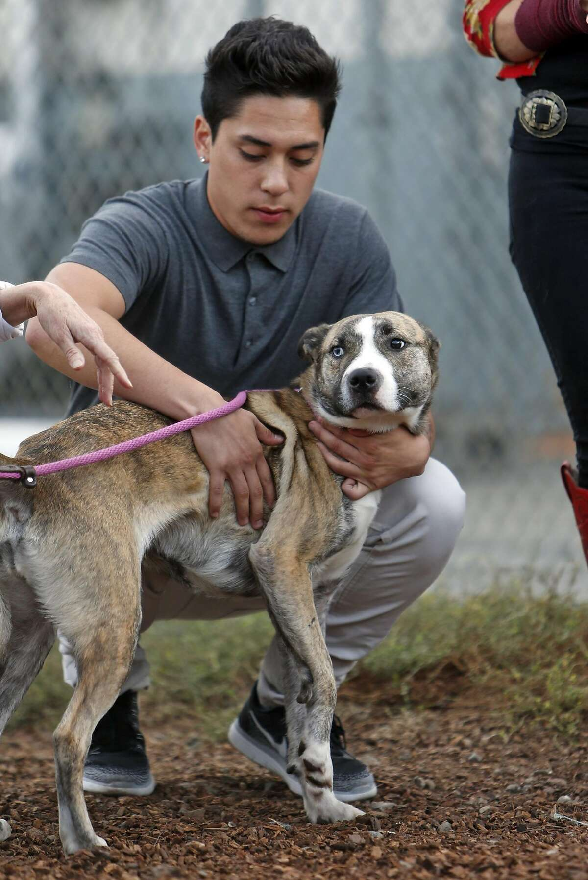 Andre Millan, the son of dog expert Cesar Millan, holds a dog as a new TV show called Dog Nation is filmed at Oakland Animal Services in Oakland, Calif., on Thursday, October 13, 2016.