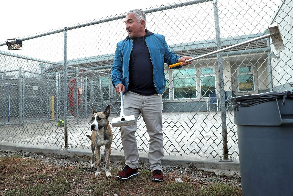 Dog expert Cesar Millan cleans up a dog run as he films a new TV show called Dog Nation at Oakland Animal Services in Oakland, Calif., on Thursday, October 13, 2016.