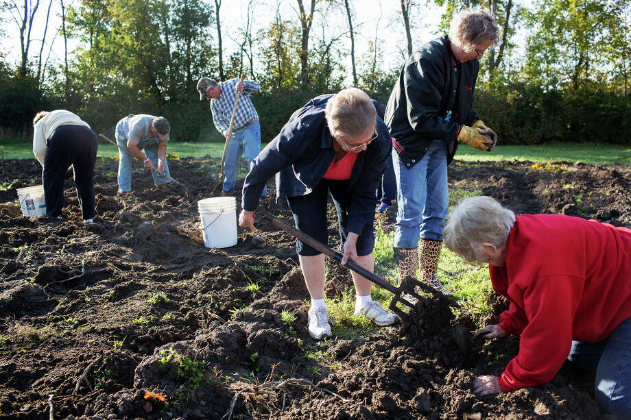 Midland residents Gretta Toner, Dorie French, and Pat Corner, dig and clean potatoes while at Gordonville United Methodist Church on Saturday. Photo: THEOPHIL SYSLO | For The Daily News