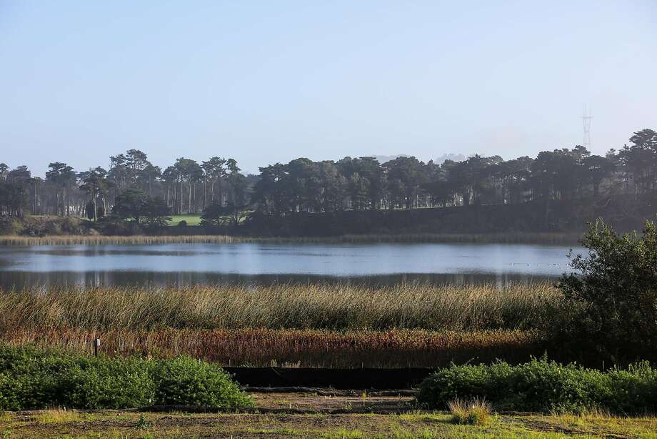 A view of Lake Merced. A 14-year-old girl was struck and killed by a vehicle while walking along Lake Merced on March 15, 2019. Photo: Gabrielle Lurie, The Chronicle