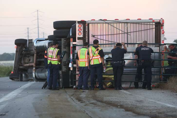 Rescuers work to extricate livestock from an overturned truck, on the Crosby Highway south of Beltway 8, Tuesday Oct. 8, 2016, in Houston. ( Jon Shapley / Houston Chronicle )