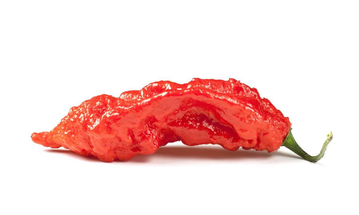 The ghost pepper, also known as naga jolokia or bhut jolokia, measures over 1,000,000 Scoville Units (a jalapeño is about 5,000).