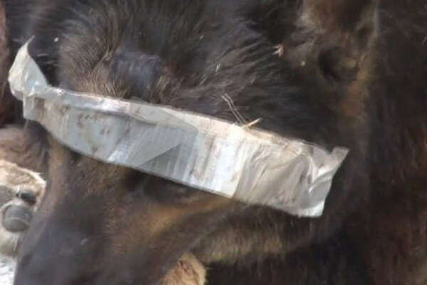 The Precinct 4 Constable in northwest Houston is investigating who left the dog, with duct tape over its eyes and muzzle and multiple injuries, near the side of the road on Monday.