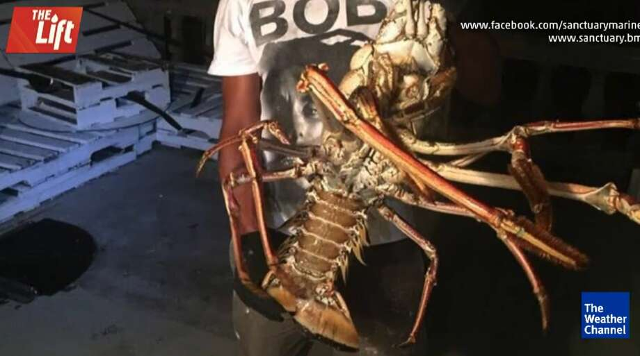 "Hurricane Nicole unearthed an Atlantic Ocean ""sea monster,"" according to a group of Bermudan fishermen who said they accidentally came face-to-face with a 14-pound lobster on Oct. 15, 2016.  Photo: The Weather Channel"