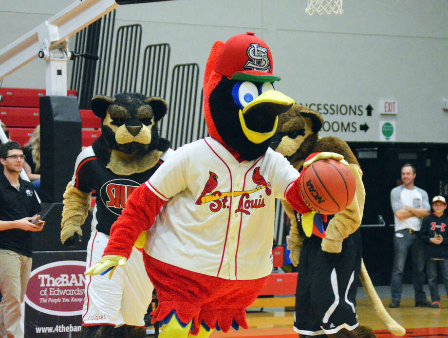 Fredbird, of the St. Louis Cardinals, dribbles the ball down the court during an exhibition game featuring mascots from around the area.