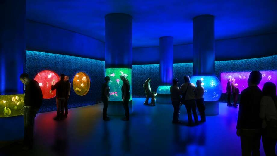 Artist's rendering of the future jellyfish exhibit at Moody Gardens.  Photo: Moody Gardens