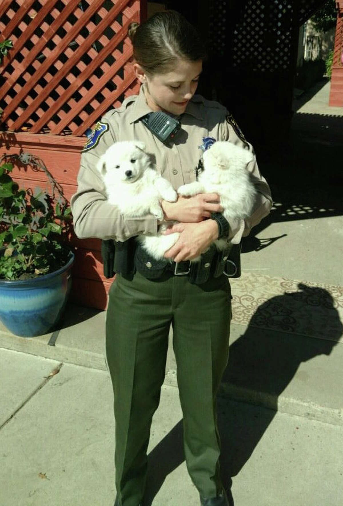 The two pups who set off a residential alarm in Santa Clara County.