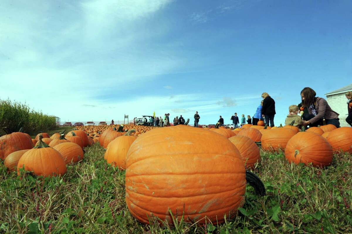 Nothing but blue skies above the pumpkin patch during Goold Orchards 27th Annual Apple Festival & Craft Show on Saturday Oct. 10, 2015 in Castleton, N.Y. (Michael P. Farrell/Times Union)