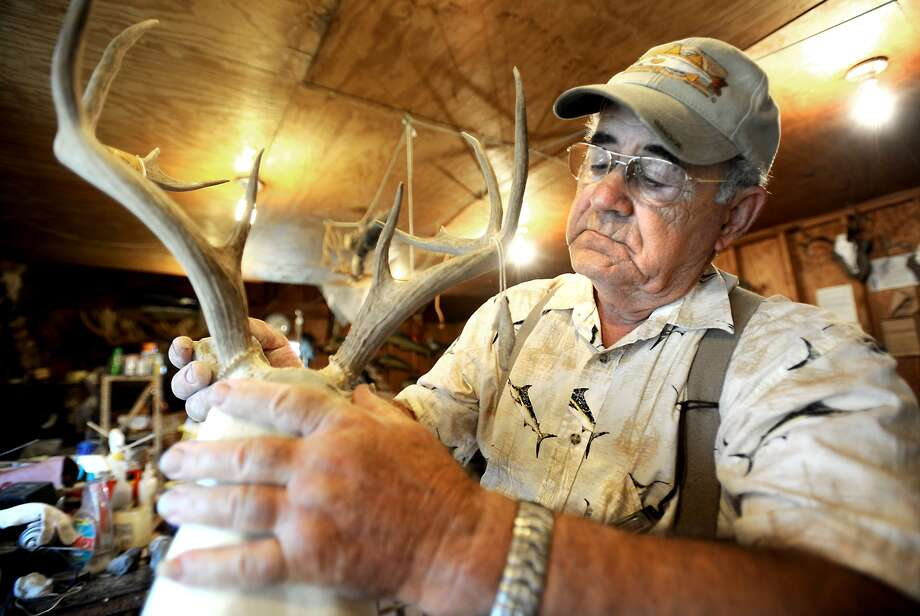 Stanley Leger demonstrates how he secures horns to a deer mold at his taxidermy shop in Beaumont in September, 2010. Whitetail deer hunting season kicks off this weekend with many businesses hoping for the best. The multibillion hunting industry brings in extra revenue for businesses statewide, but many local ones say that they have seen a dip businesses because of the tough economic times. Tammy McKinley/The Enterprise Photo: TAMMY MCKINLEY / Beaumont