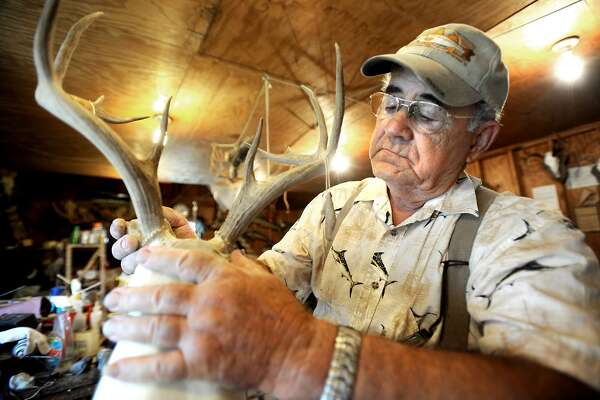 Stanley Leger demonstrates how he secures horns to a deer mold at his taxidermy shop in Beaumont in September, 2010. Whitetail deer hunting season kicks off this weekend with many businesses hoping for the best. The multibillion hunting industry brings in extra revenue for businesses statewide, but many local ones say that they have seen a dip businesses because of the tough economic times. Tammy McKinley/The Enterprise
