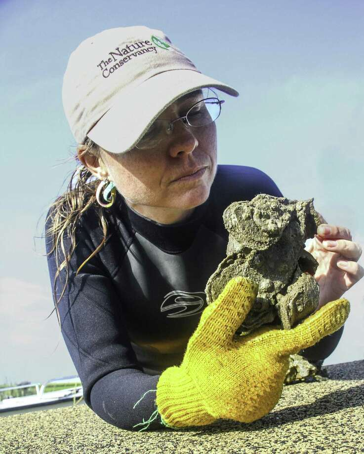 Julie Sullivan of The Nature Conservancy inspects a clump of live oysters from thriving Half Moon Reef, an oyster reef restoration project in Matagorda Bay that has proved a boon to recreational anglers as well as marine life. Photo: Shannon Tompkins /Houston Chronicle