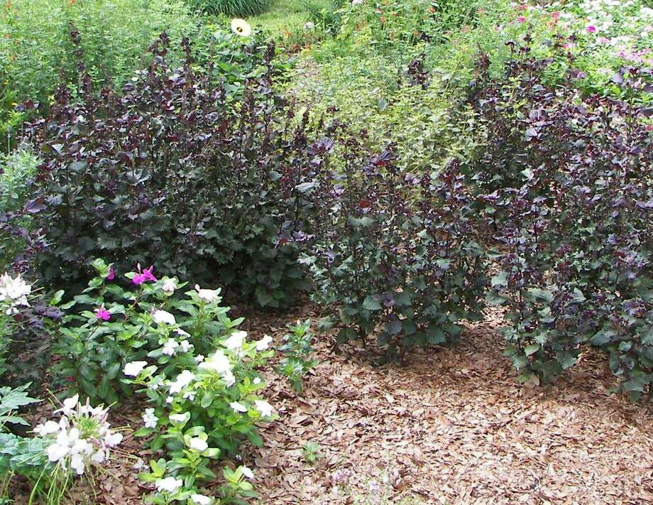 A blanket of live oak leaves serves as mulch around annuals and perennials. Photo: COURTESY FORREST W. APPLETON