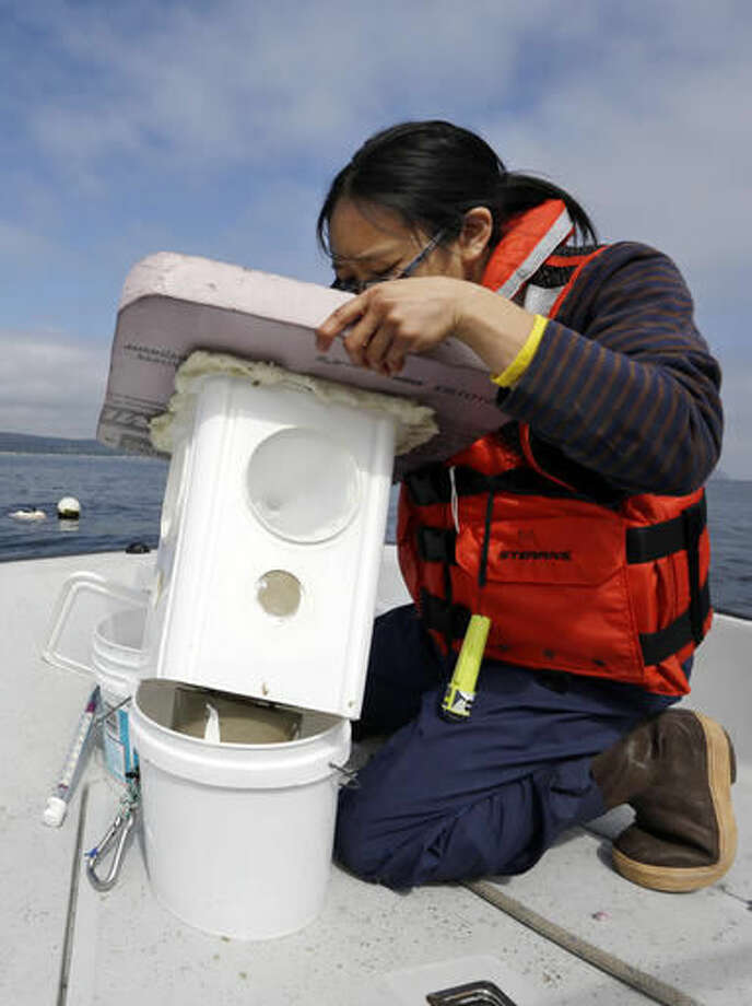 Audrey Djunaedi, a lab technician with NOAA's Northwest Fisheries Science Center, looks into a light-catching trap set out the day before to collect Dungeness crab larvae in the marine waters outside of the center's station in Mukilteo, Wash., on July 26, 2016. As marine waters continue to absorb more atmospheric carbon dioxide, federal scientists are worried that the changing ocean chemistry may put Northwest Dungeness crabs at risk. (AP Photo/Elaine Thompson)