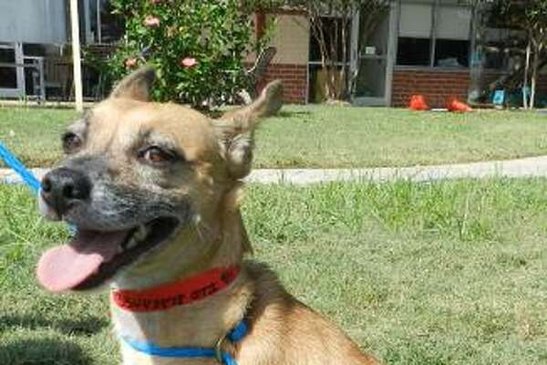 Foxy, 5, and Tiffany, 2, will be available for adoption at 11 a.m. Friday at Citizens for Animal Protection, 17555 Interstate 10 W. More information: cap4pets.org or 281-497-0591.