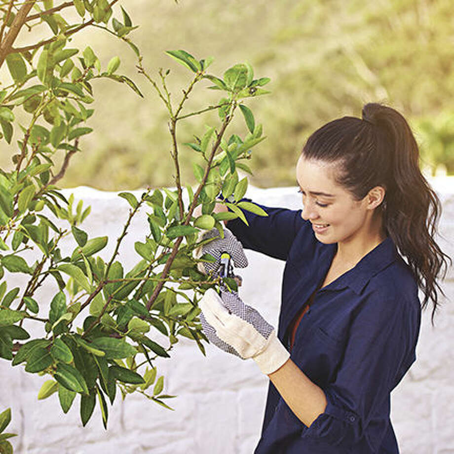 Keep Your Trees Green and Your Property Value Greener