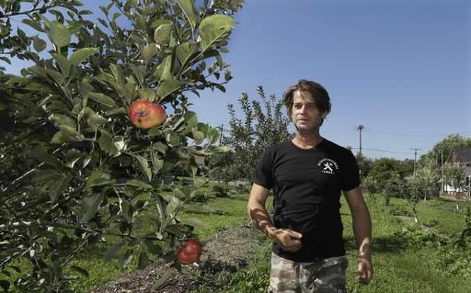 In this Sept. 19, 2016, photo, Ron Shelton stands by one of his apple trees in Detroit. Some Detroit residents are using a do-it-yourself approach to start businesses amid the city's overabundance of vacant land and wide open spaces. Shelton is sinking his finances into a small apple orchard and cider mill in a neighborhood dotted with empty lots and aging homes. (AP Photo/Carlos Osorio)