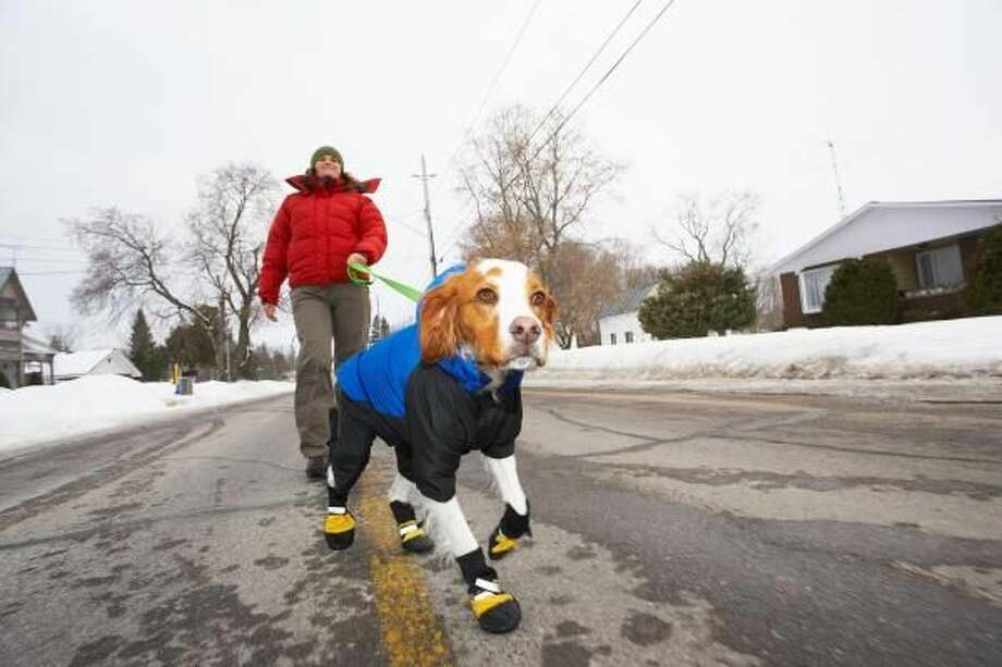 Tips to Protect Your Pets this Winter