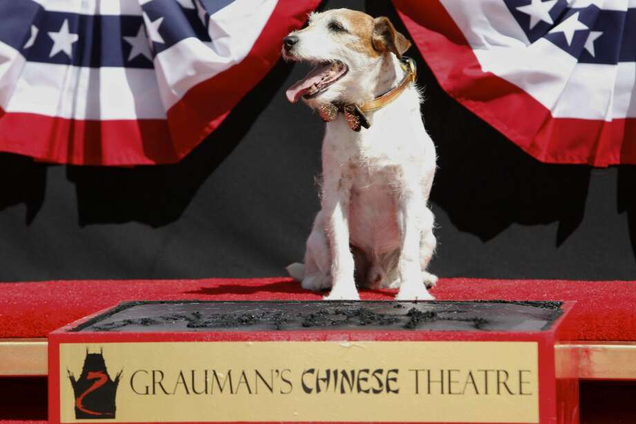 "Canine star Uggie attends the pawprint ceremony for Uggie the dog at Grauman's Chinese Theatre on Monday June 25, 2012, in Los Angeles. Uggie, star of the Oscar-winning film ""The Artist,"" became the first dog to cement his paws outside of Grauman's Chinese Theatre. (Photo by Joe Kohen/Invision/AP)"
