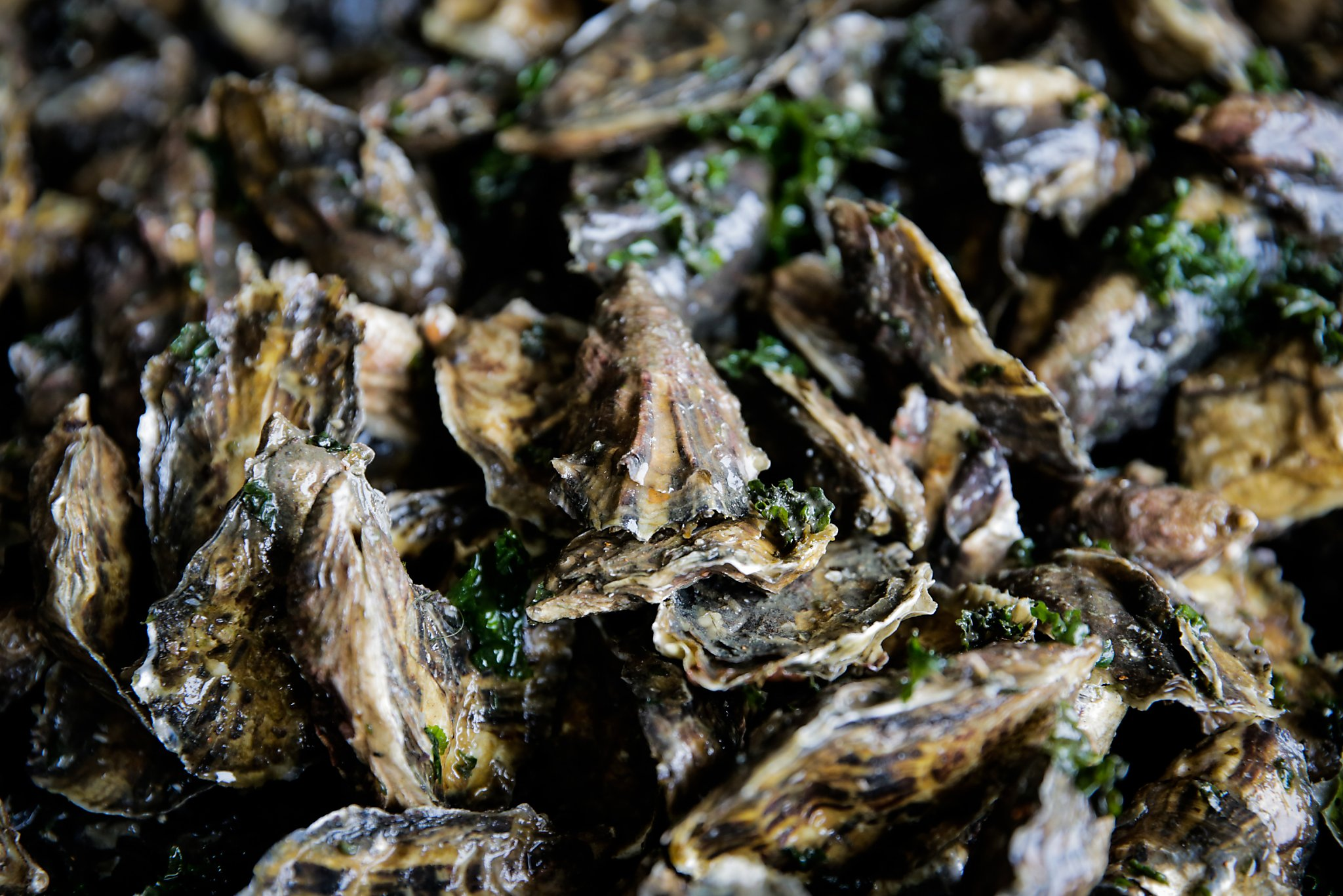Paralyzing nerve toxin found in Bay Area shellfish