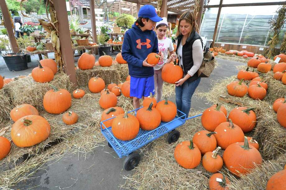 Jen Petruzzo from Darien looks through all the different types and sizes in the pumpkin patch with son Michael and daughter Mia while shopping for pumpkins at Reynolds Farms Nursery and Country Garden Center in Norwalk, Conn. on Wednesday October 12, 2016. Photo: Alex Von Kleydorff / Hearst Connecticut Media / Connecticut Post