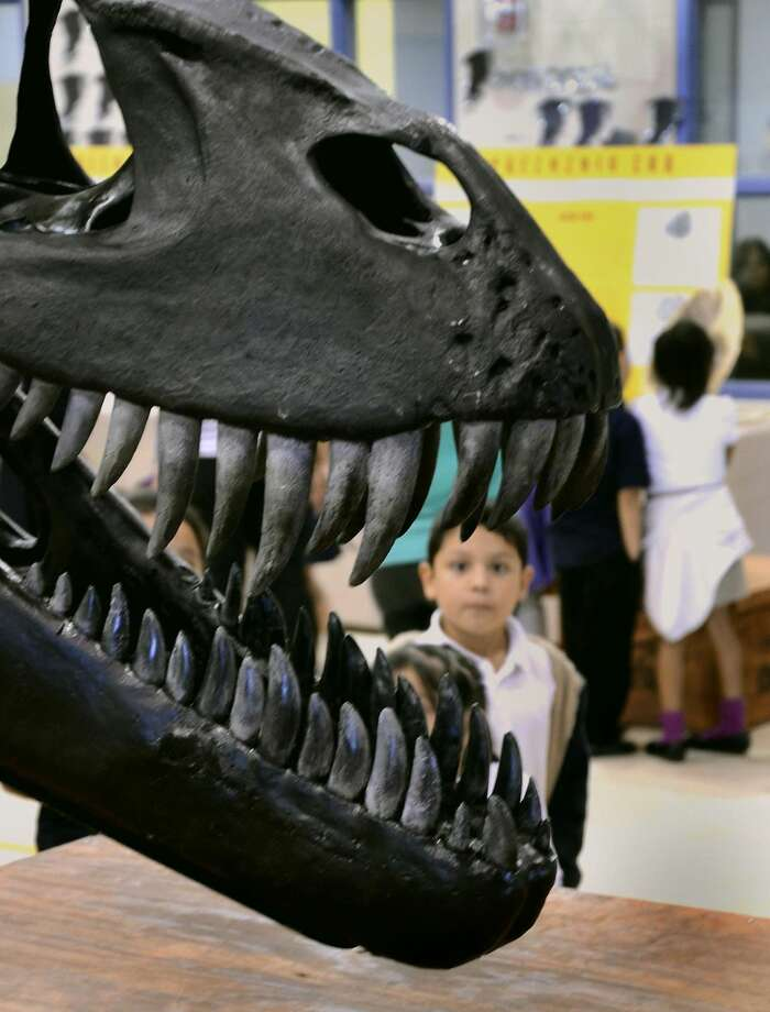 A Centeno Elementary student is framed within the mouth of one of the largest T-rex skulls ever unearthed as he and his classmates participate in the Dinosaur Museum in the Classroom exhibit at the school's gymnasium Monday afternoon. (PHOTO BY CUATE SANTOS