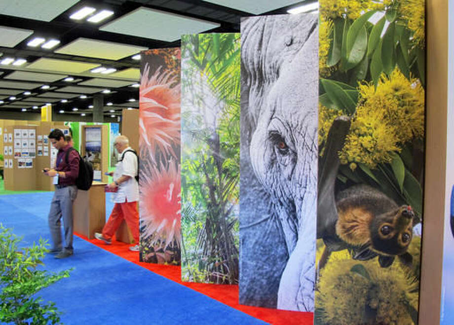 Conference attendees walk by a display of elephants and other wildlife at The International Union for Conservation of Nature World Conservation Congress on Friday, Sept. 9, 2016, in Honolulu. Members of the international environmental group are voting on a proposal to urge leaders in every country to close domestic ivory markets as the savanna elephant population in Africa declines. (AP Photo/Cathy Bussewitz)