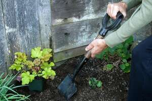 The D-Handled short shovel gives you the power of a shovel with the flexibility of a trowel for small-scale garden tasks like planting a new perennial in a raised bed.  Credit: Pam Peirce