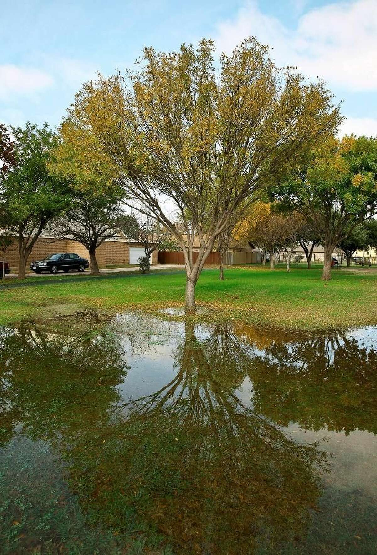 A tree's reflection is shown in a large puddle of water at Blas Castaneda Park on Sunday. Photo by Victor Strife