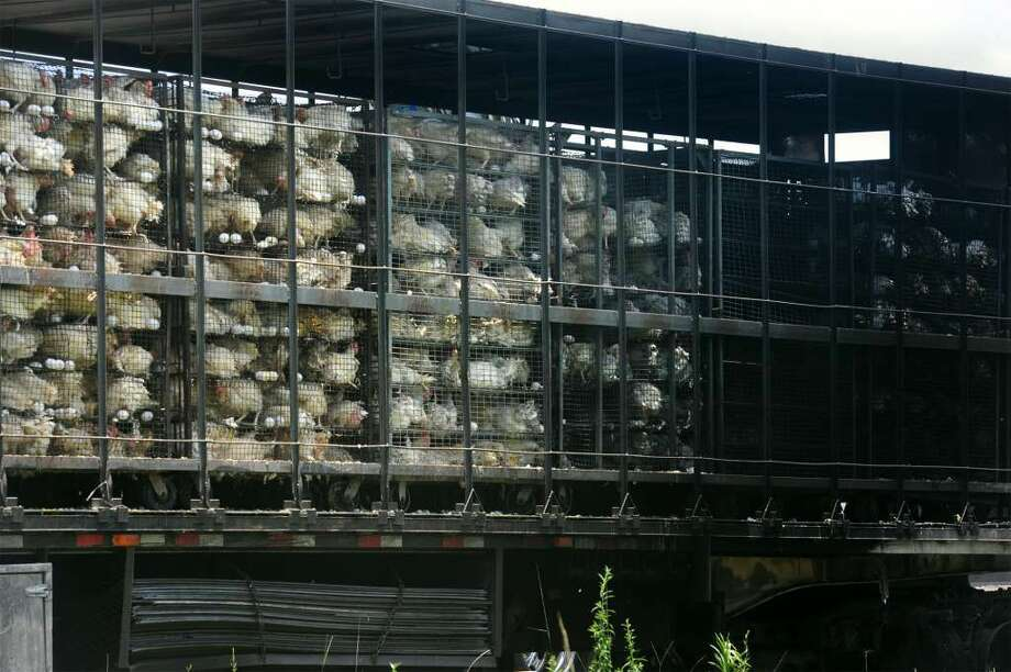 Around 2,000 chickens were killed on Interstate 10 Wednesday after a fire broke out on a tractor trailer traveling west near Orange's Flying J convenience store.