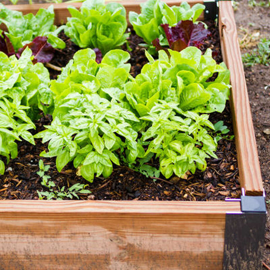 Get Growing with an Urban Garden