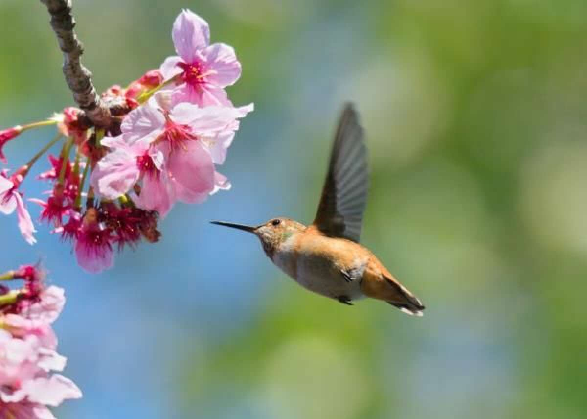 Spring Tips to Attract Beautiful Birds to Your Yard