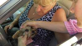 Rhonda Williams of Cudjoe Key, Fla., has her Yorkie, Riley, examined by Natalie Wendling, a veterinarian with the U.S. Department of Agriculture's Animal and Plant Health Inspection Service, at a roadside checkpoint in Key Largo, Fla. Agriculture officials are checking all animals exiting the keys for signs of the screwworm.