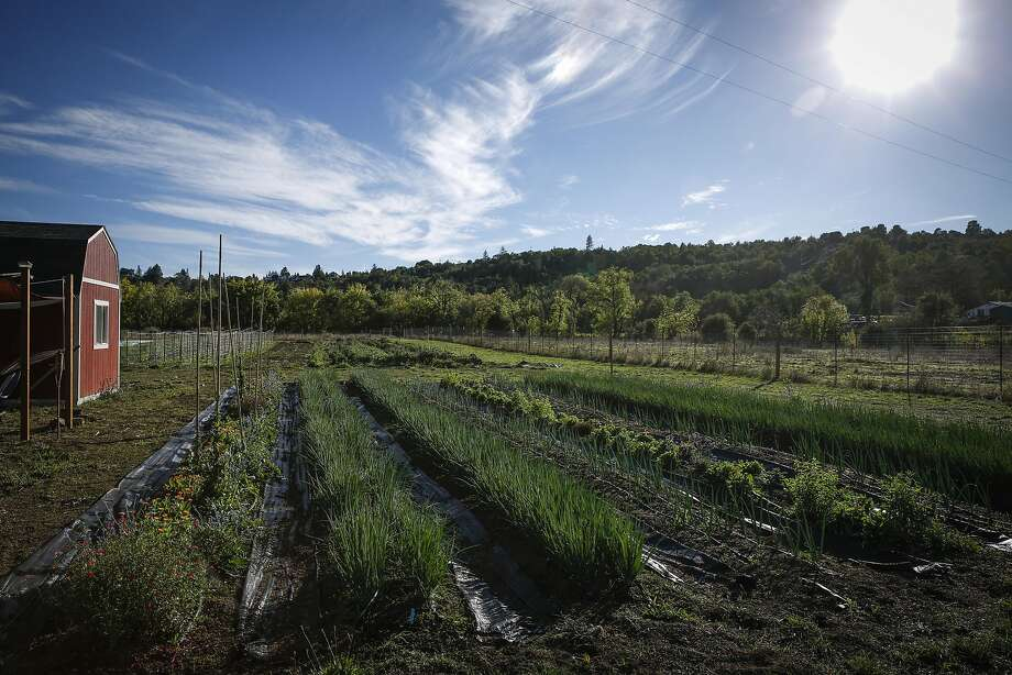 Single Thread Farm in Healdsburg Photo: Russell Yip, The Chronicle